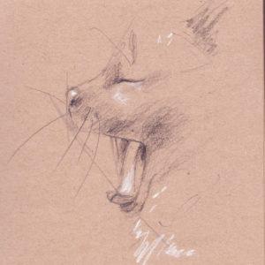 Croquis de chat entrain de bâiller