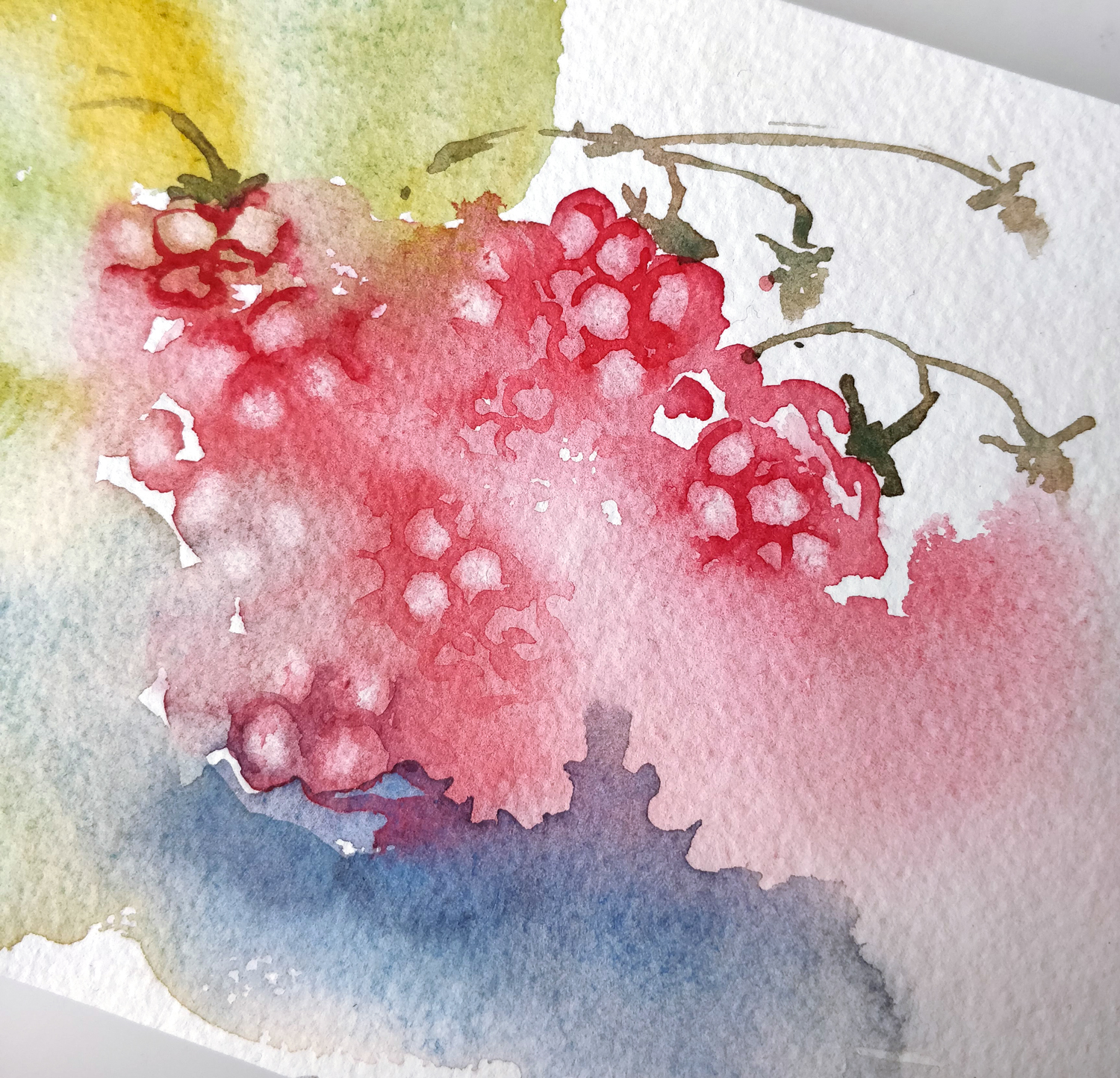 Study of raspberry in watercolor